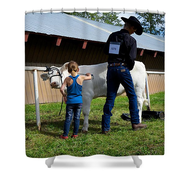 Final Touches On The Charolais Heifer  Shower Curtain