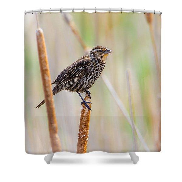 Finding Summer Shower Curtain