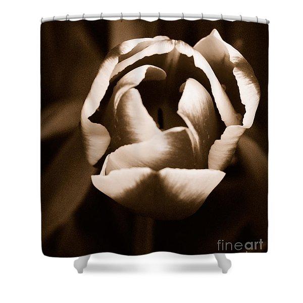 Fine Art - Tulip Shower Curtain