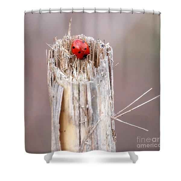 Fine Art- Ladybird Shower Curtain
