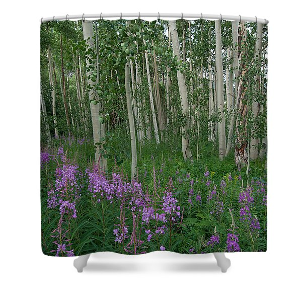 Fireweed And Aspen Shower Curtain