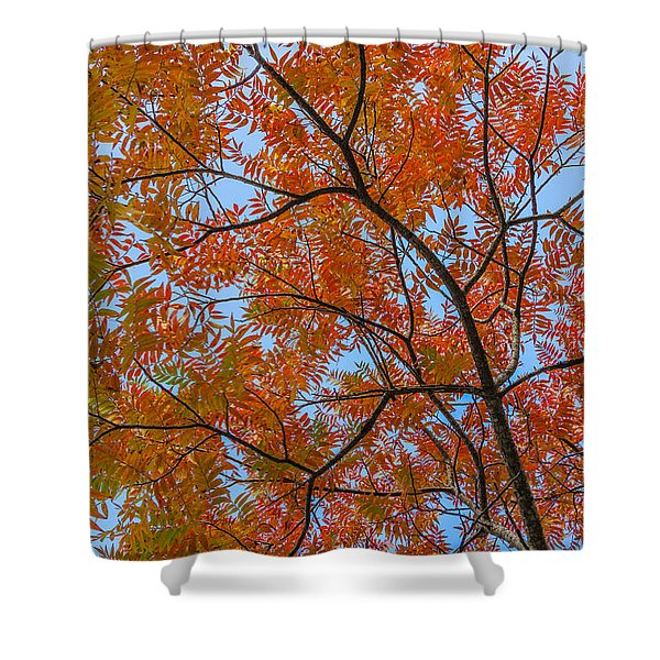 Flameleaf Sumac Mostly Changed From Green To Red Shower Curtain