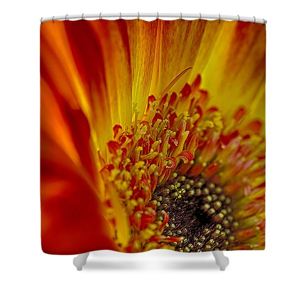 Flaming Gerbera Shower Curtain