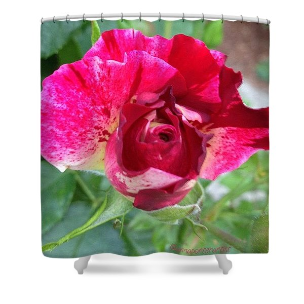 Fleurie - Rosebud Shower Curtain