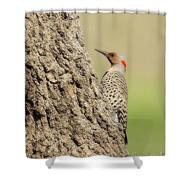 Flicker On Tree Trunk Shower Curtain