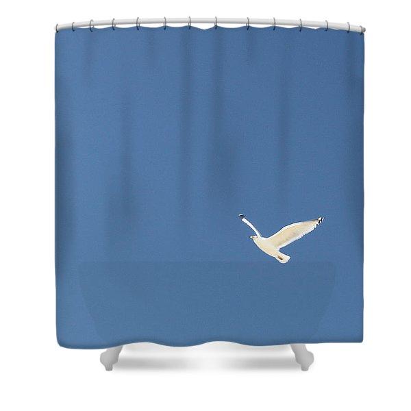 Flight Shower Curtain