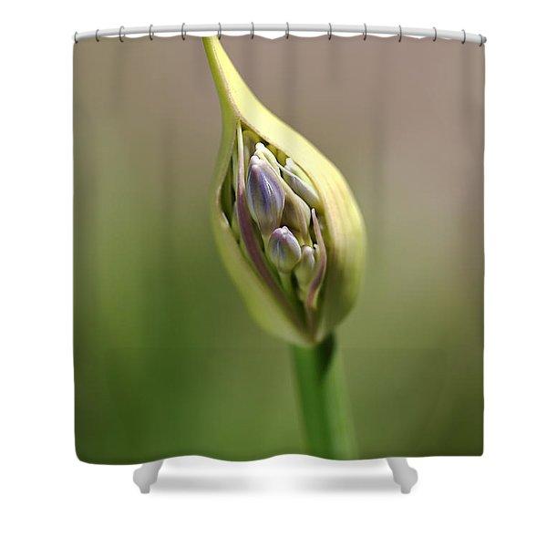 Flower-agapanthus-bud Shower Curtain