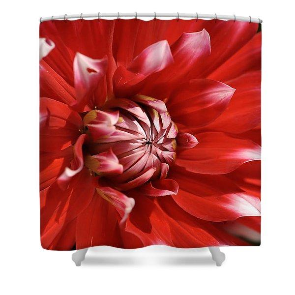 Flower- Dahlia-red-white Shower Curtain