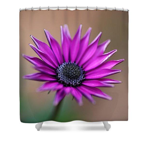 Flower-daisy-purple Shower Curtain