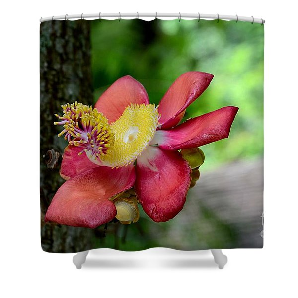 Flower Of Cannonball Tree Singapore Shower Curtain