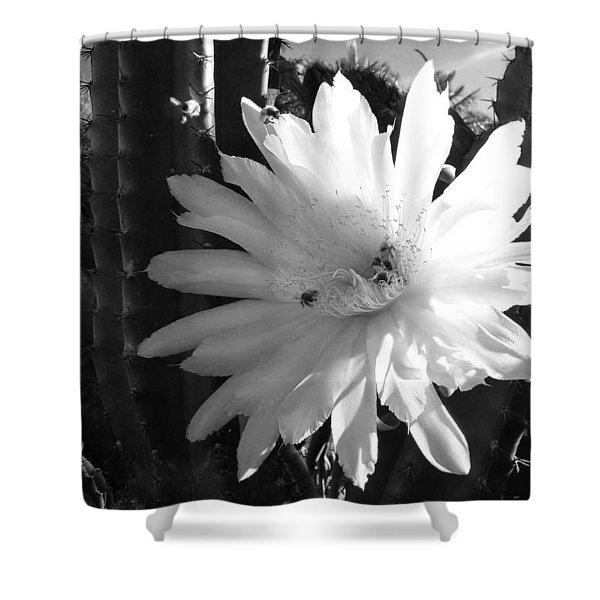 Flowering Cactus 1 Bw Shower Curtain