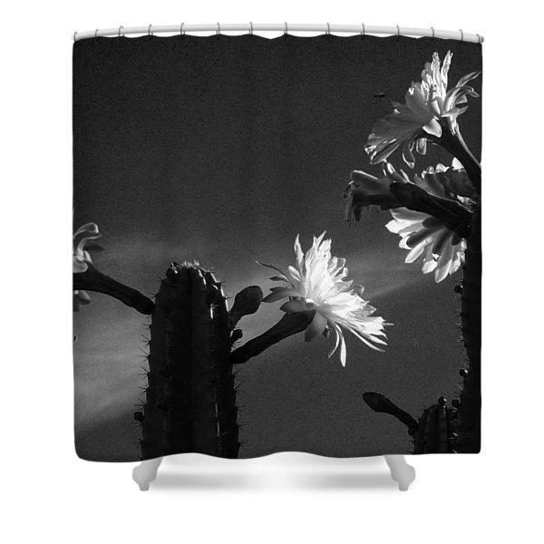 Flowering Cactus 4 Bw Shower Curtain