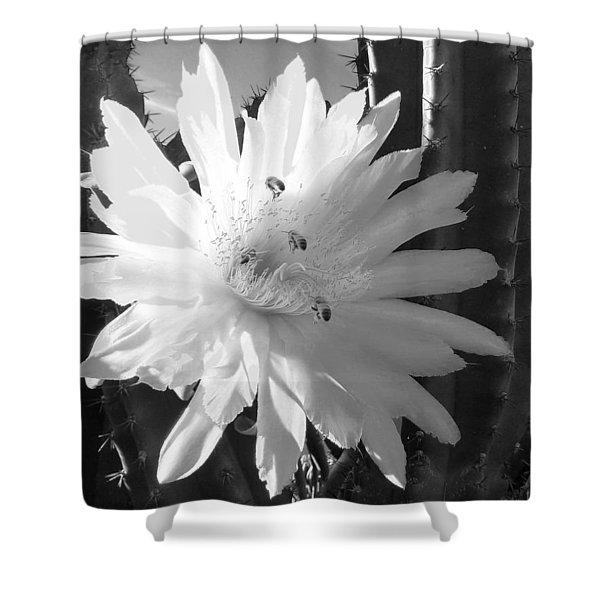 Flowering Cactus 5 Bw Shower Curtain