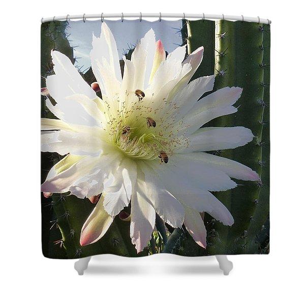Flowering Cactus 5 Shower Curtain