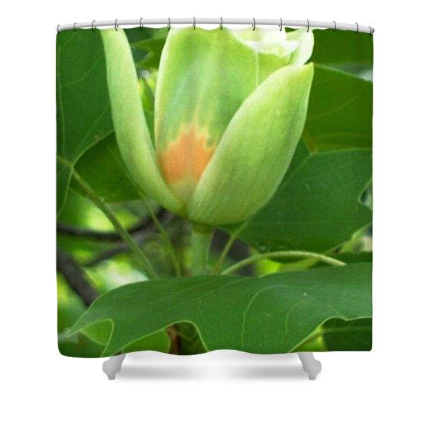 Flowering Maple Shower Curtain