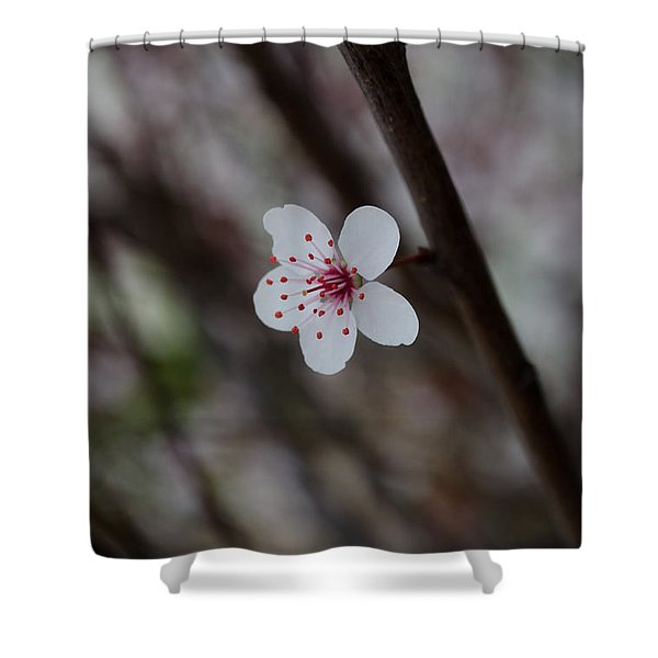 Flowering Plum 3 Shower Curtain
