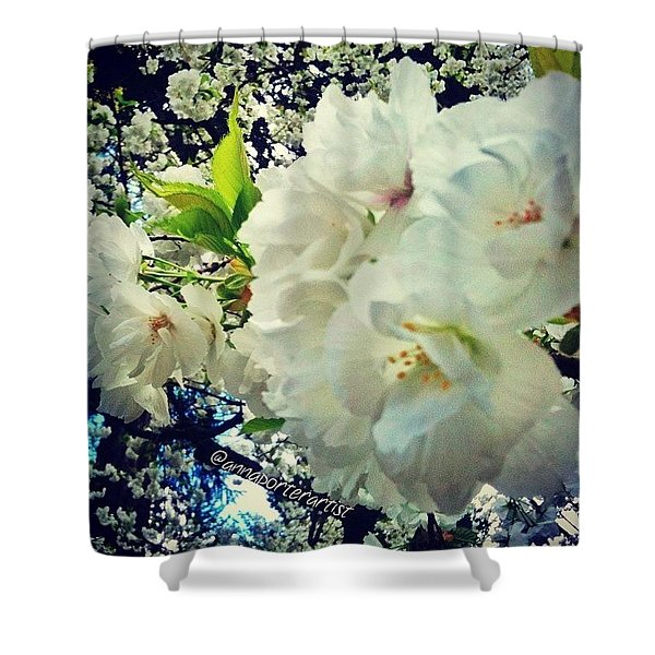 Flowering White Dogwood Shower Curtain