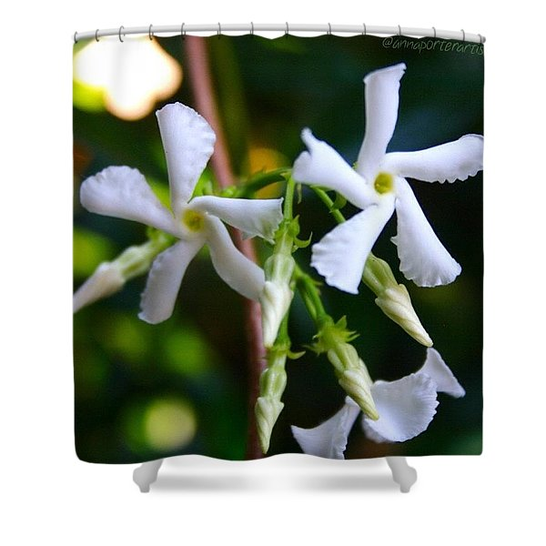 Flowering White Jasmine Shower Curtain