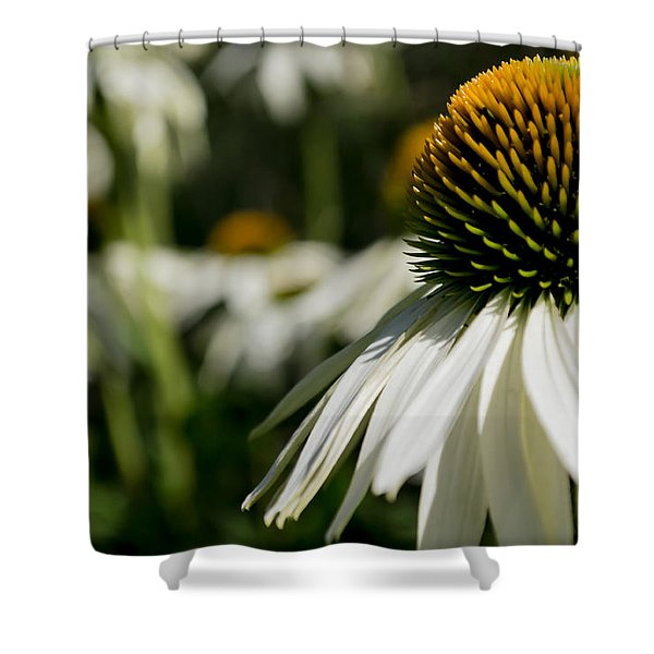 Shower Curtain featuring the photograph Flowers - Echinacea White Swan by Scott Lyons