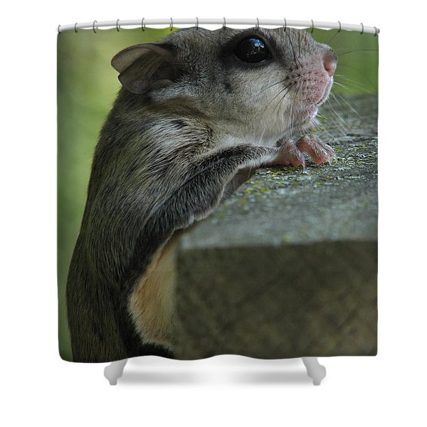 Flying Squirrel Shower Curtain