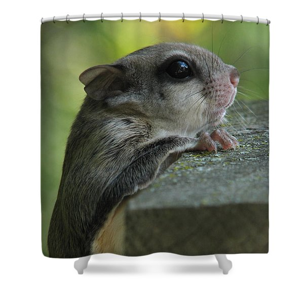 Flying Squirrel Shower Curtain