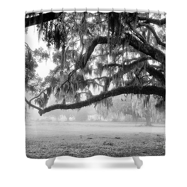 Foggy Morning On Coosaw Plantation Shower Curtain