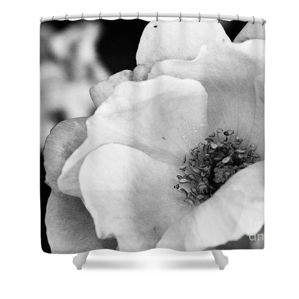 For You With Love Shower Curtain
