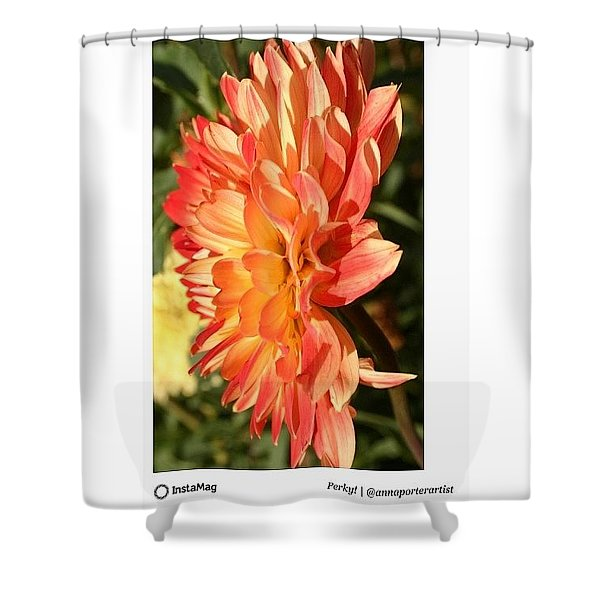 Forecast Is Perky! With Warm  Indian Shower Curtain