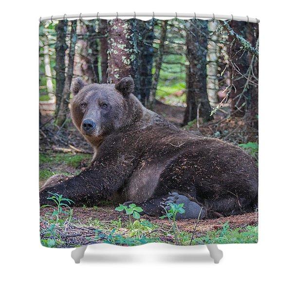 Forest Bear Shower Curtain