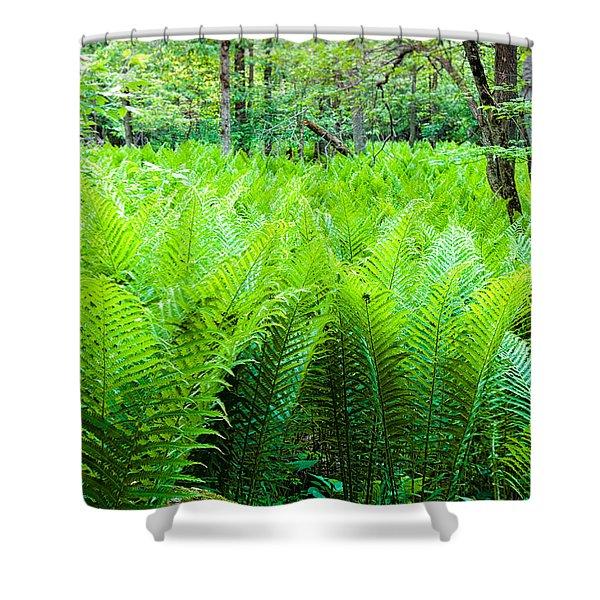 Forest Ferns   Shower Curtain