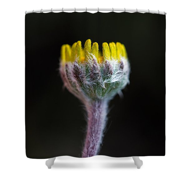 Four-nerve Daisy Bud Beginning To Open Shower Curtain