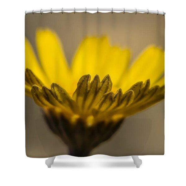 Four-nerve Daisy Shower Curtain