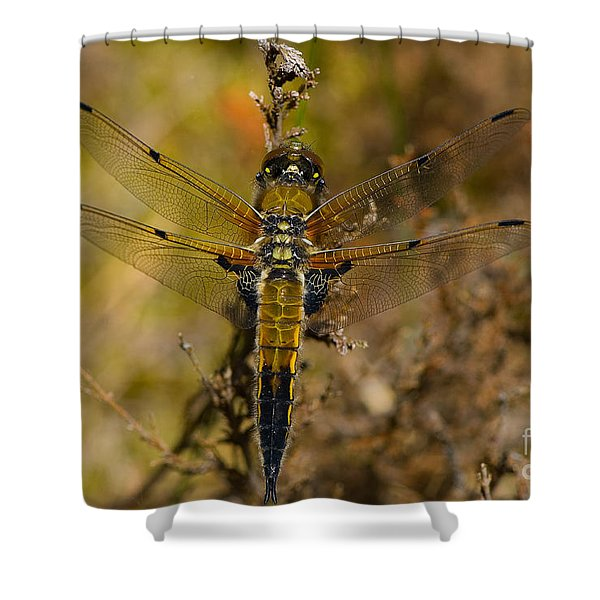 Four-spotted Chaser Shower Curtain