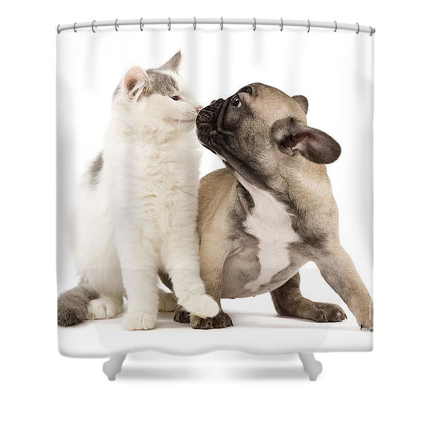 French Bulldog With Kitten Shower Curtain