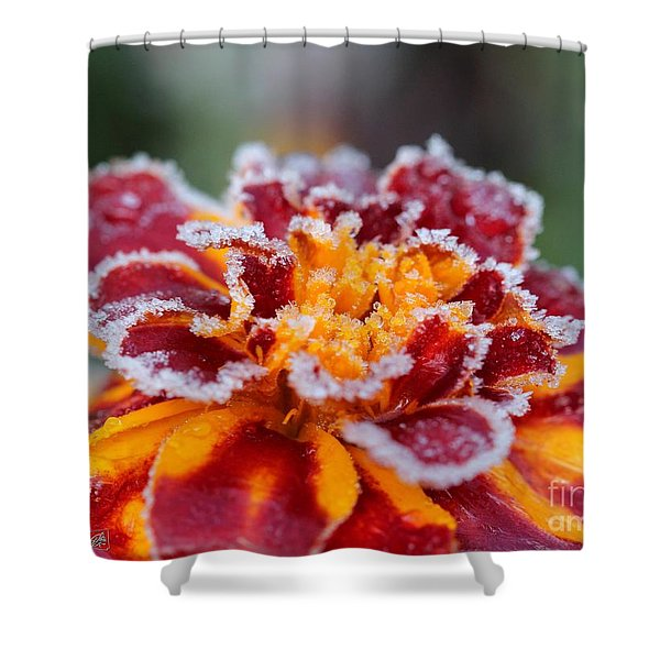 French Marigold Named Durango Red Outlined With Frost Shower Curtain