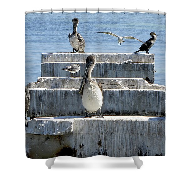 Pelican Friends Shower Curtain