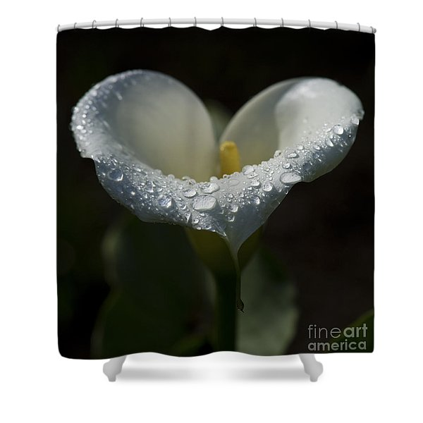 From Costa Rica With Love.. Shower Curtain
