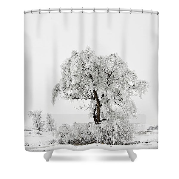 Shower Curtain featuring the photograph Frosted by Mary Jo Allen