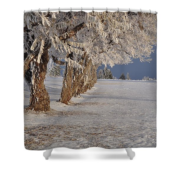 Frosted Trees Shower Curtain