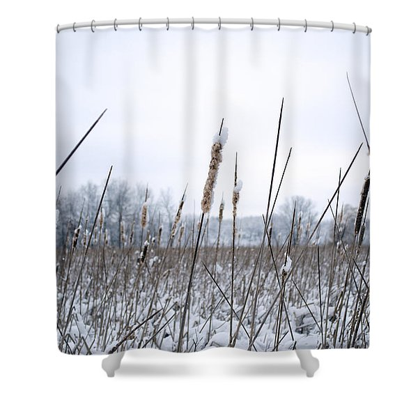 Frosty Cattails Shower Curtain