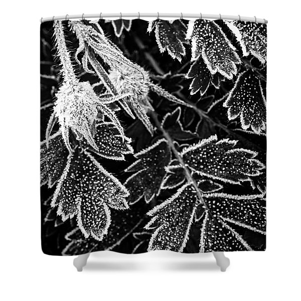 Frosty Plant In Fall Shower Curtain