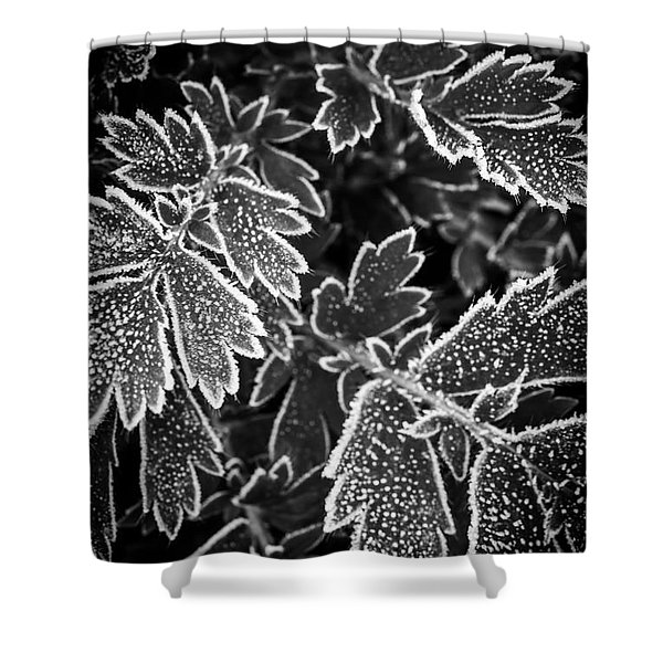 Frosty Plants In Fall Shower Curtain