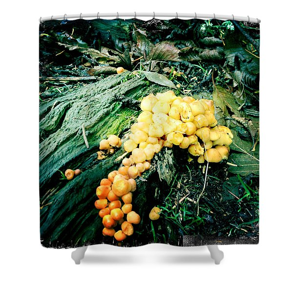 Fungus Among Us Shower Curtain