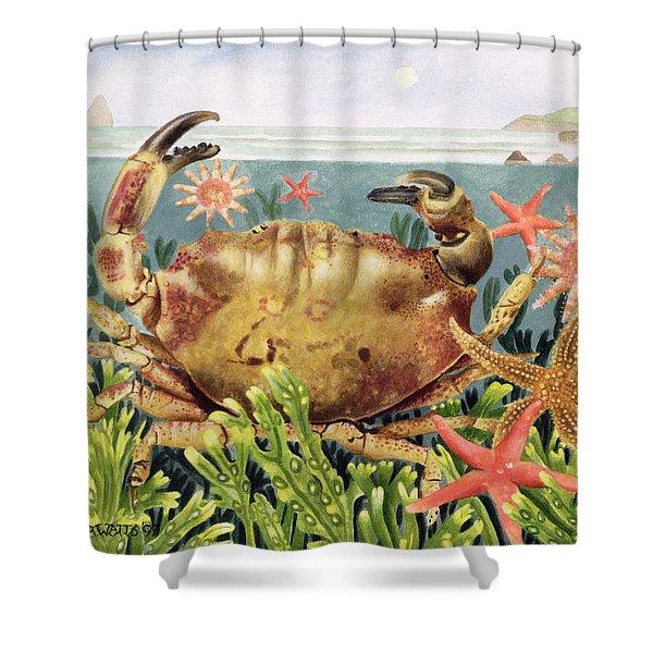 Furrowed Crab With Starfish Underwater Shower Curtain