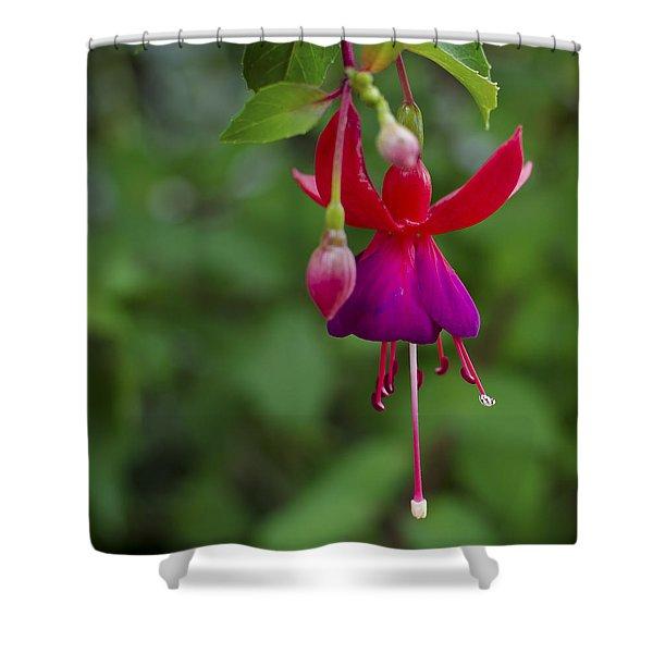 Fuschia Flower Shower Curtain