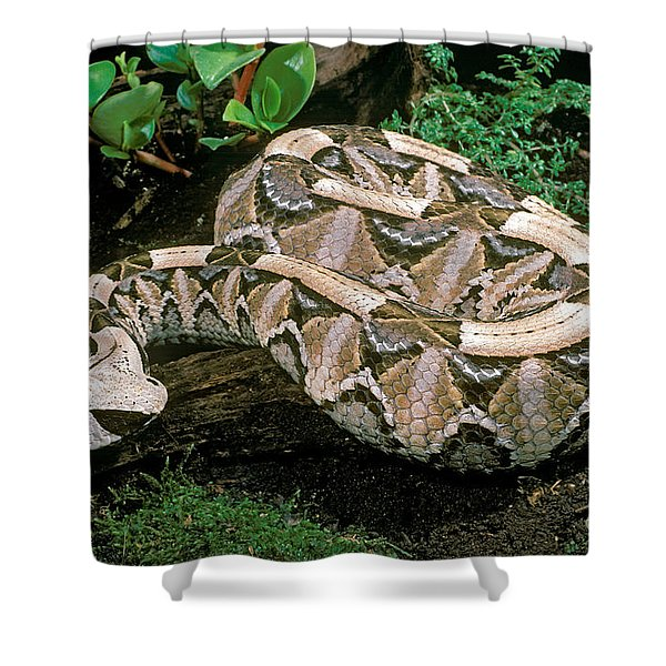 Gaboon Viper Shower Curtain