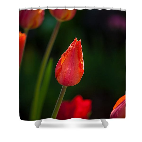 Garden Tulips Shower Curtain