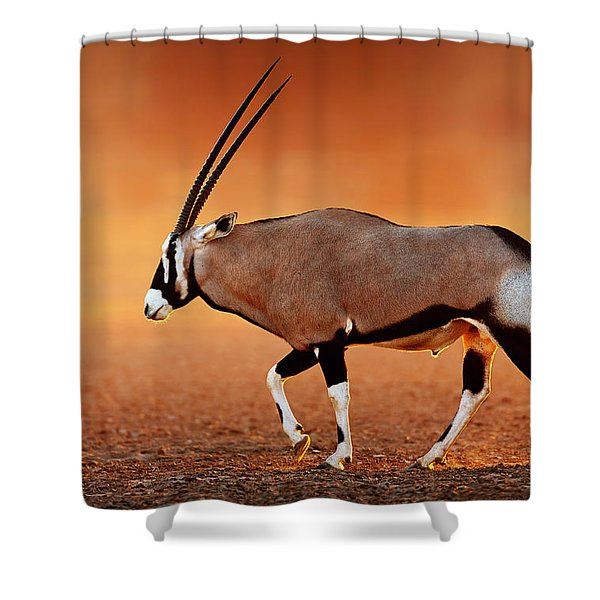 Gemsbok On Desert Plains At Sunset Shower Curtain