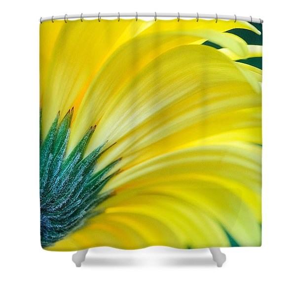 Shower Curtain featuring the photograph Gerber Daisy by Garvin Hunter