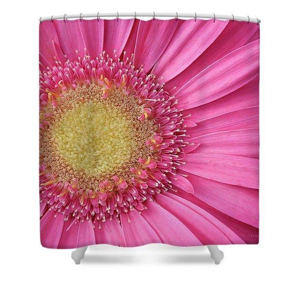 Gerbera Daisy 2 Shower Curtain